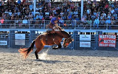 P3110261 (David W. Burrows) Tags: cowboys cowgirls horses cattle bullriding saddlebronc cowboy boots ranch florida ranching children girls boys hats clown bullfighters bullfighting