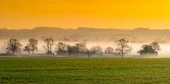 Green, White & Gold (Peter Quinn1) Tags: packington measham greenwhitegold stpatricksday ireland irishflag leicestershire mist dawn morning layers