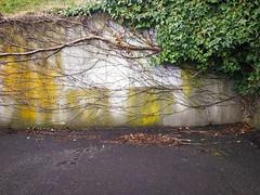 Takeover... (Beeke...) Tags: nature gardens walls vegetation backalleys huaweimate9