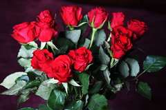 DSC_4717 (PeaTJay) Tags: nikond750 reading lowerearley berkshire macro micro closeups gardens indoors nature flora fauna plants flowers bouquet rose roses rosebuds