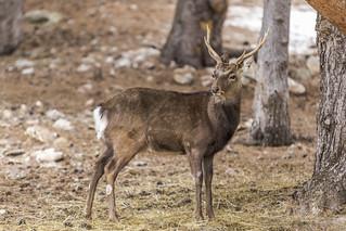 Nuturlandia, Principat d'Andorra