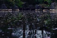 Kirschblütenteich (g e g e n l i c h t) Tags: sakura kirschblüten teich wasser garten japanisch westpark münche iga 1983 leica summicronr2050mm mft lumixgx7 park
