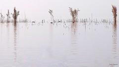 Il Trasimeno in un mare di nebbia (carlaroganti) Tags: lake trasimeno fog