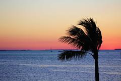 Canon2017.03.17 2294 (seahorse19911) Tags: birds brittanyanddadsvisit canon20170317 florida floridakeys sunset beach