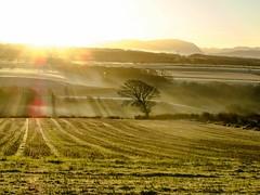 misty_morning_dogwalk_0830-3 (allybeag) Tags: crosby fields morning light mist rays crepuscular inversion misty rising trees shadows golden artyfarty