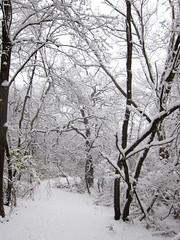 IMG_2829 (sjj62) Tags: s90 snow snowscape lith lakeinthehillsil winter winterscape