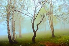 Primavera (Marco Allegro) Tags: