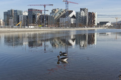 Barcode, Oslo, Norway (Ingunn Eriksen) Tags: barcode oslo norway reflections geese modernisme buildings nikond750 nikon