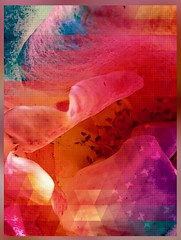 Surrealist At Play - Oceans 🌊 Of Roses 🌹 (Chic Bee) Tags: triangle distortion imageprocessing postprocessing math mathematics fundamental prism mathematica mathematical euclid euclidian abstraction abstract pixlr app parallellines rectangles triangles effects fx chaos void textile design elements elemental structure