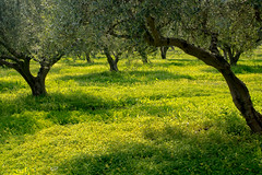 323_3762-2 (smülli) Tags: kreta crete hellas island mittelmeer mediterranian griechenland