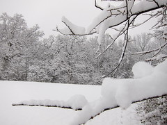 IMG_2817 (sjj62) Tags: s90 snow snowscape lith lakeinthehillsil winter winterscape