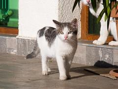 Бездомное (akk_rus) Tags: nikon coolpix p7100 nikonp7100 pet pets nature animals streetcats straycats cat cats chat chats feline gato кот коты кошка