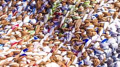 paper or plastic (lancenesbitt) Tags: sea arizona brown white art colors phoenix canon rebel different close zoom homeless plastic bags recycle weave t3i