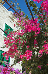 Bougainvillea at the Cathedral of St Domnius, Split, Croatia (Miche & Jon Rousell) Tags: pink flowers blue sea sky green water clouds coast cathedral croatia campanile split adriatic dalmatia boganvillea dalmatiancoast cathedralofstdomnius