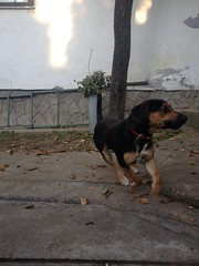 He likes to play (nevenbozic) Tags: dog friend best lucky neven bozic