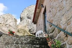Ice in Penela da Beira (Gail at Large | Image Legacy) Tags: portugal 2014 gailatlargecom peneladabeira viseudistrict icethedog