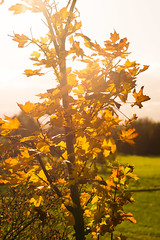 Autumn colors (mike.saupe78) Tags: autumn light color tree mike golden sony herbst 99 alpha sonne baum farben saupe planart1485