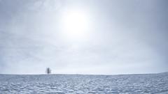 Célibataire (Rouvier Jean Pierre) Tags: alone neige arbre seul célibataire