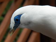 x100_1499 (samuel_wkip) Tags: bird hongkong kodak central hongkongpark hongkongparkaviary kodakz990 z990 hongkongpark香港公園 hongkongparkaviary香港公園觀鳥園