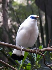x100_1500 (samuel_wkip) Tags: bird hongkong kodak central hongkongpark hongkongparkaviary kodakz990 z990 hongkongpark香港公園 hongkongparkaviary香港公園觀鳥園
