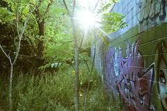 Brilliant Corners (Pheral Lamb) Tags: city nyc trees light sun newyork film grafitti traintracks f90 edge sunburst diffusion expired retainingwall nikonn90 28105 ektar25 cinderblockwall hiddencorner