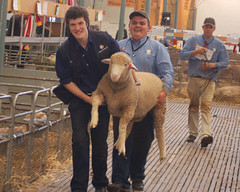 PD_On the Run_Glen Devon_DSC_4300_2_D (renrut01) Tags: show sheep royal dorset lamb adelaide late showing carry poll