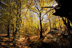 Do we really need more? (Sunsword & Moonsabre) Tags: old autumn trees light red wild orange sunlight mountain tree fall nature colors leaves yellow forest photography highlands nikon october stream europe day colours hiking serbia wideangle shades hike highland nikkor beech balkan radan d700 1424mmf28 nikonfx gajtan