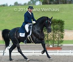141024_2014_AUS_D_Champs_4836.jpg (FranzVenhaus) Tags: horses performance sydney australia competition event nsw athletes aus equestrian riders dressage siec
