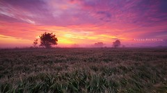 Red morning (Andrei Reinol) Tags: morning summer sky mist colors fog clouds landscape early estonia crop beautifulsky cropfield welcometoestonia visitestonia estonianlandscape andreireinolcom colorrfulclouds