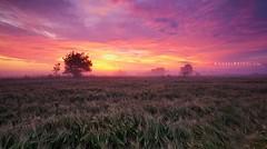 Red morning (Andrei Reinol) Tags: morning summer sky mist colors fog clouds landscape early estonia crop beautifulsky cropfield welcometoestonia visitestonia estonianlandscape andreireinolcom colorrfulclouds