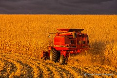 Golden Hour corn harvest (Thomas DeHoff) Tags: lighting golden corn sony dramatic iowa case hour combine ih 2366 a580
