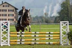 DSC05870_s (AndiP66) Tags: horse oktober macro sports sport schweiz switzerland mark sony luzern sp ii di if alpha tamron concours 77 pferd equestrian derby f28 ld horsejumping 70200mm wettbewerb 2014 springen eschenbach kantonsolothurn inwil reithof springreiten cantonsolothurn stleodegar andreaspeters pferdespringen 77m2 a77ii ilca77m2 77ii slta77ii