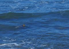 IMG_0947 (SvitlanaMH) Tags: ocean beach hawaii pacific oahu turtle turtles seaturtle turtlebay greenseatrtle