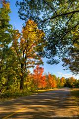 Color Tour ... maple time (Ken Scott) Tags: road autumn usa fall october michigan fallcolors lakemichigan greatlakes hdr freshwater voted 2014 leelanau colortour 45thparallel sbdnl sleepingbeardunenationallakeshore mostbeautifulplaceinamerica