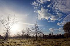 Lanstroper See (dennis brummel photography) Tags: trees sky sun clouds germany deutschland wiese himmel wolken ground sonne bäume sheeps lanstrop scharfe