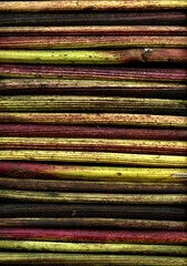 56326.01 Inula helenium (horticultural art) Tags: lines pattern stems inula inulahelenium horticulturalart