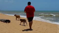 Diz que no gosta, mas vive rodeado.... (ronalyconstantino) Tags: praia beach dogs mar vila velha cachorros es interlagos