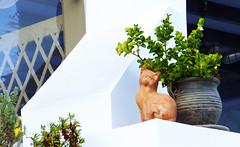 Santorini, Thira, Greece 18 (Kenny-) Tags: travel blue sky color greek aegean hellas santorini greece grecia griechenland    grce oia cyclades mykonos thira fira grcia thera griekenland yunanistan  grekland kreikka    grkenland grgorszg   ecko