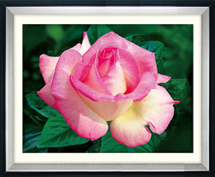 K054粉色馨情