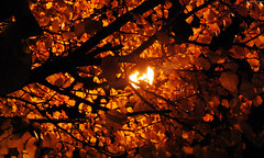 "Autumn tree backlit by streetlight • <a style=""font-size:0.8em;"" href=""http://www.flickr.com/photos/34843984@N07/15546726305/"" target=""_blank"">View on Flickr</a>"