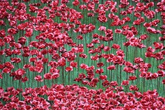 Blood Swept Lands and Seas of Red. 2 (konstantynowicz) Tags: red blood poppy poppies lands swept toweroflondon seas bloodsweptlandsandseasofred toweroflondonpoppies