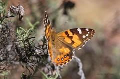 IMG_9815 (stewartk1970) Tags: canberra australia act wildlife