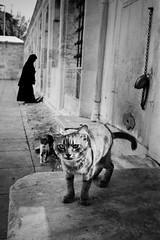 a Cat and a woman (SungsooLee.com) Tags: street leica trip travel woman film silhouette analog cat turkey temple kodak 28mm trix istanbul mosque summicron journey mp asph fatih f20 tx400 sungsoolee