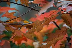 Delicious Autumn! (RHS in NS) Tags: park autumn fall nova nikon scotia shubie d610 afsnikkor55300mm14556ged