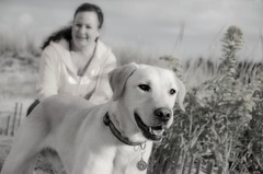 friend & phriend (~ Life As I See it ~) Tags: bw dog beach me jack labrador yellowlab retriever labradorretriever yellowdog ibsp ididnttakethisphoto phriend outwithphriend