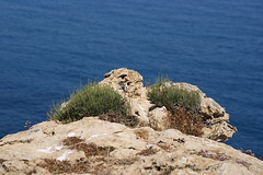 Scrubs by the sea (Steenjep) Tags: holiday spain ferie menorca arenaldencastell
