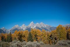 035 20140920 GTNP IMG_8937 (jvlady) Tags: autumn mountains reflection fall snakeriver beaverdam grandtetonnationalpark schwabacherslanding
