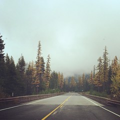 It's a bit foggy on the mountain today (DigitalCable) Tags: trees fall fog square washington state pass squareformat wa rise chinook iphoneography instagramapp uploaded:by=instagram