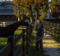 Founder Jim Buckley Pets Horse (Buckley Fence, LLC) Tags: autumn fall illinois goldenhour lightsplash steelfence jimbuckley blackfence epiclight buckleyfence steelboard steelboardhorsefence blackhorsefence