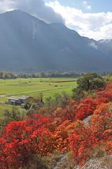 Turtmann /Valais 2014 (luka116) Tags: automne schweiz switzerland suisse swiss svizzera arbre wallis octobre valais talus 2014 cotinuscoggygria turtmann coteaux arbustre getwing